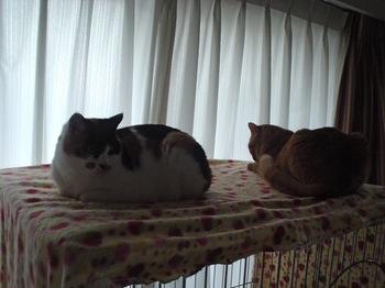 2010Jan4-Ram&Donna.jpg