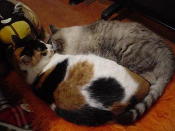 2010Jan4-Yoko&Donna1.jpg