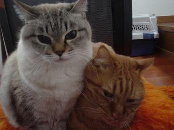 2010Jan4-Yoko&Ram1.jpg