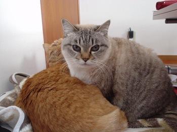 2010Jan4-Yoko&Ram4.jpg