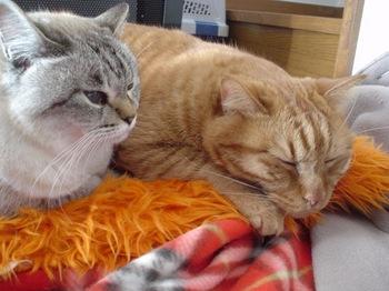 2010Jan4-Yoko&Ram5.jpg