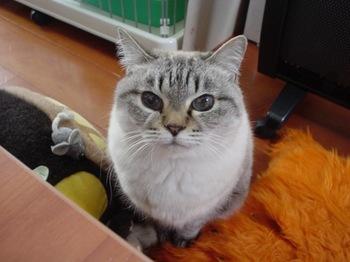 2010Jan4-Yoko3.jpg