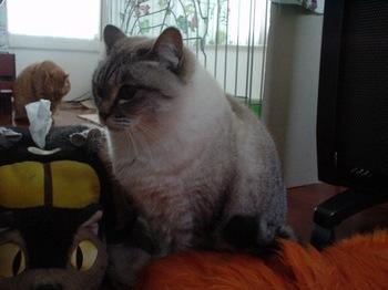2010Jan6-Yoko1.jpg