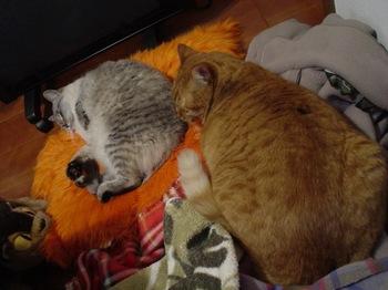 2010Jan6-Yoko&Ram.jpg