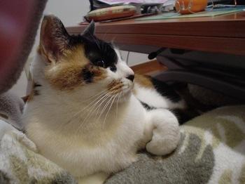 2010Jan8-Donna1.jpg