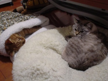 2010Jan8-Yoko&Ram1.jpg
