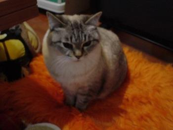 2010Jan8-Yoko5.jpg