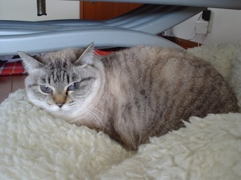 2010Jan9-Yoko4.jpg