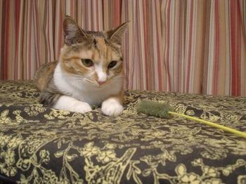2010Nov7-Cocona3.jpg