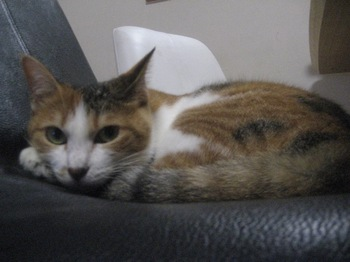2010Sep29-Lilina2.jpg
