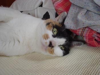 2011May27-Donna4.jpg
