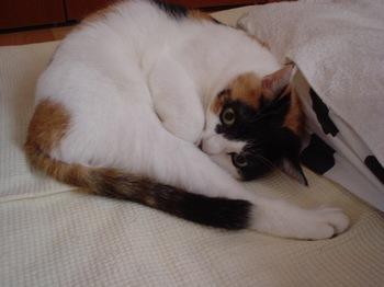 2011Nov10-Donna1.jpg