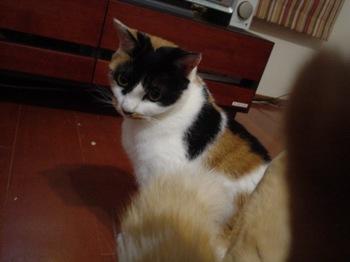2011Nov11-Donna.jpg