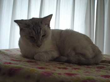 2011Nov5-Sunny1.jpg