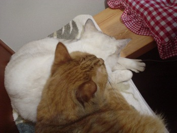 2011Nov6-Sunny&Ram3.jpg