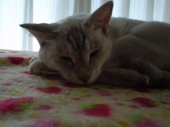2011Oct14-Sunny2.jpg