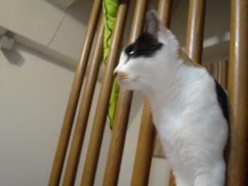 2011Oct17-Donna1.jpg
