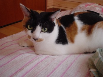 2011Oct17-Donna2.jpg
