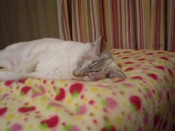 2011Oct17-Sunny2.jpg