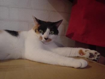 2011Oct23-Donna3.jpg